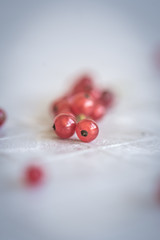 Red Currants - Berries