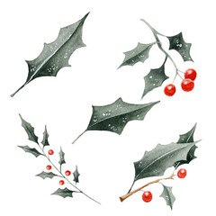 Watercolor christmas berry, leaves illustration