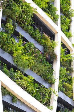 Detail from a living wall