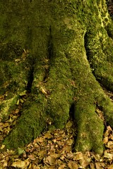 Trunk covered in green moss close up selective focus