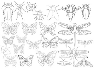 vector, isolated, set of insects, beetles and butterflies, coloring book
