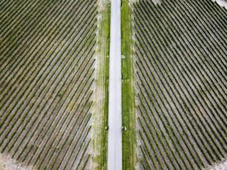 Aerial view of vineyards in Huesca Spain Europe