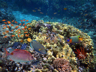 Marine Life in the Red Sea.