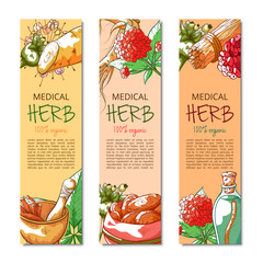 Ginseng vertical hand drawn banner vector collection