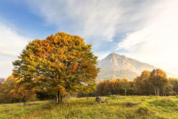Colorful tree and Grigna Meridionale in the background, Piani Resinelli, Valsassina, Lecco province, Lombardy, Italy