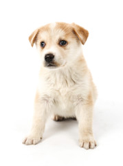 Cute puppy dog posing against a white background