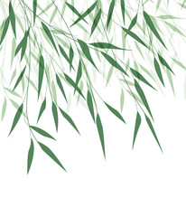 Vector illustration of Bamboo leaf. Natural background with green leaves