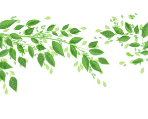 Vector illustration Natural background with green leaves. Fresh green tree leaves