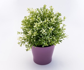 White - green  plastic decorative flower in a violet plastic pot is on a white background