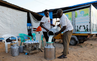 Workers gather cans of milk from Holstein Friesian cows before packaging into retail sachets at the Som milk farm in the outskirts of Mogadishu