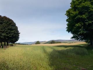 Wheat field in Glen Clova