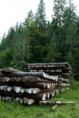 Forestry timber, industry pine stacked.