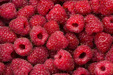 Raspberry with drops of water, many freshly picked ripe red fruits, closeup, natural background
