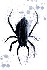 Black halloween spider on white background with clipping path
