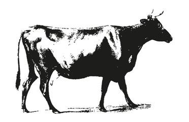 vintage cow picture vector