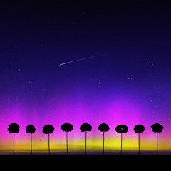 Landscape with trees at night. Vector illustration with isolated silhouettes of maples growing in grass. Northern lights in starry sky. Colorful aurora borealis