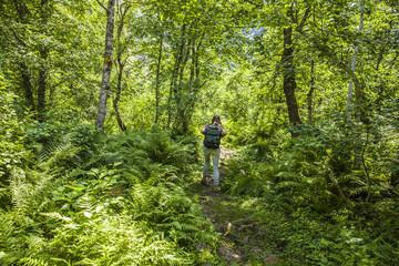 Wandern durch Urwald