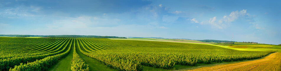 panoramica view ofcolorful fields and rows of currant bush seedlings as a background composition Wall mural