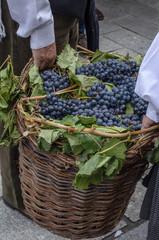 Celebración de la vendimia en Toro, Zamora, España