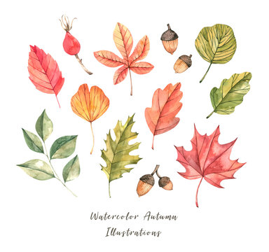 Hand drawn watercolor illustration. Set of fall leaves. Forest design elements. Hello Autumn! Perfect for seasonal advertisement, invitations, cards