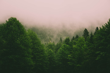 Mystic landscape of evergreen forest