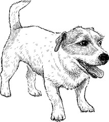 Sketch of a funny small dog