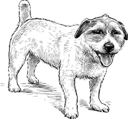 Sketch of a watching small dog