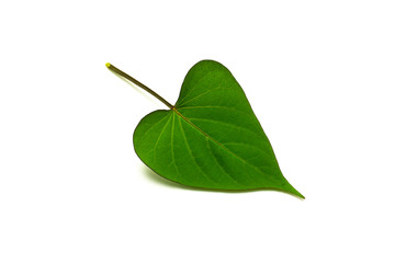 Fototapete - green sweet potato leaves isolated on white background.
