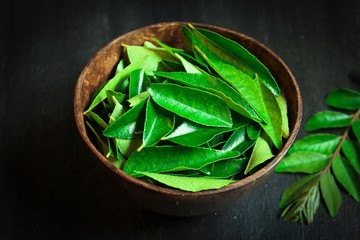 Fresh Curry leaves still life on  dark moody background