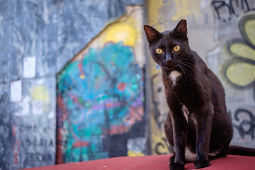 Young black cat and her fixed expression. Grafitti in the backround. Hipster cat.