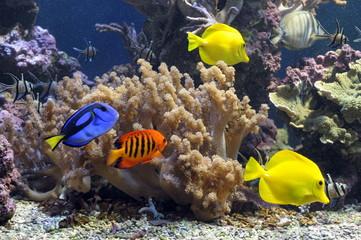 Undersea world. Diving. Aquarium, aquarium, fish, corals, sharks, aquarium fish, algae