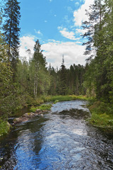 Fast forest stream