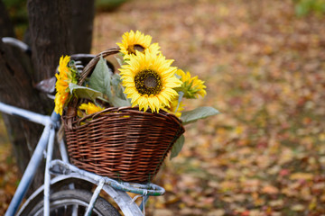 Bouquet of sunflowers on retro styled bicycle at autumn forest.