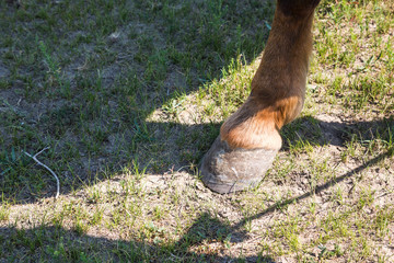 Hoof of a horse - power, strength and duration.