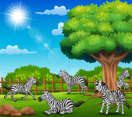 The zebras are enjoying nature by the cage