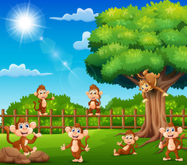 The monkeys are enjoying nature by the cage