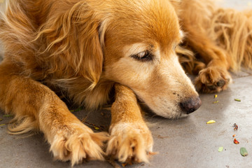 sad dog at floor