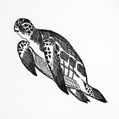 Sea turtle with white background.Illustration