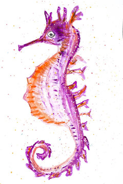 Illustration of seahorse with white background