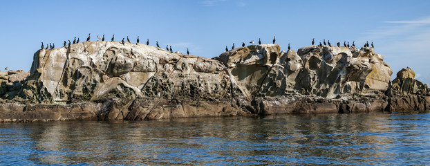 Cormorants on rock islet in southern British Columbia.