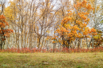 Foto op Canvas Landschappen Woods