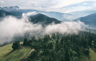 Misty Forest Drone View