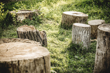 Closeup tree stumps among a forest, high resolution