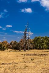 Trockenheit Landschaft Panorama Sommer