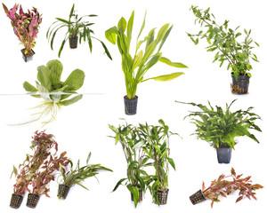 aquarium plants in studio