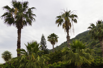 Palm trees on the mountainside