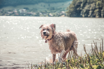 Dog playing in the water on a hot summer day