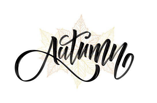 Vector illustration: Handwritten brush lettering composition of Autumn on hand drawn fall leaves background
