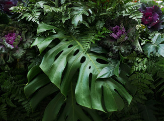 Tropical leaves Monstera philodendron and ornamental plants flora arrangement nature backdrop on dark background.