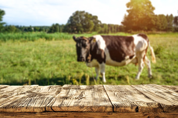 Desk of free space and landscape with cow on grass.